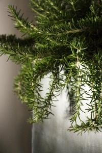 Grethe Plant Colum